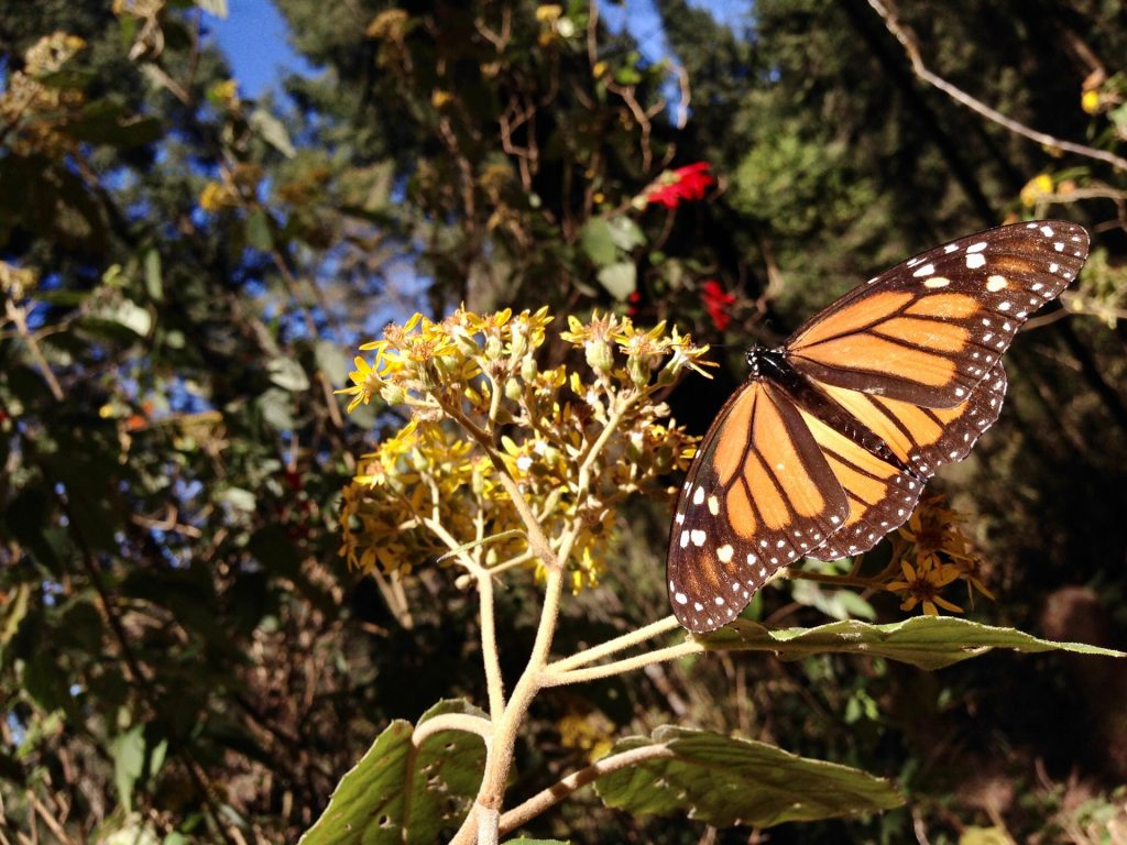 Mariposas y aventura
